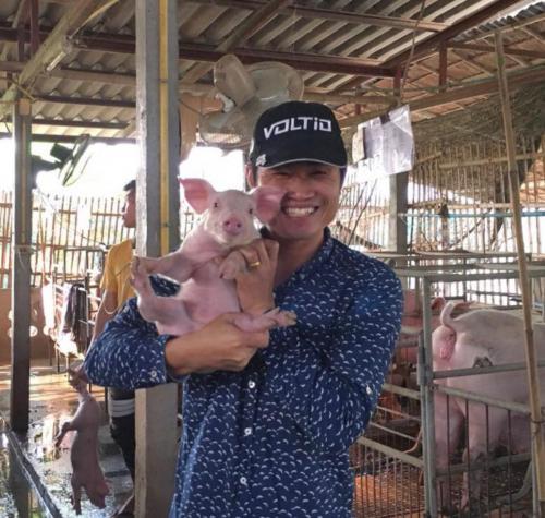 Piggy Bank piglet